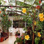 View inside my conservatory in Bristol. Photo 2007