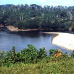 At Mamfe, Cameroon, the Cross River widens out to include a substantial shingle beach. These waters and the surrounding forest were home to several hippos. February 1965.