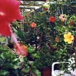 My conservatory. Photo 2009