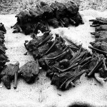 Smoked and dried fruit bats, although which species was not clear. They were on sale in a Bafut market, Cameroon, along with many other local foods. April 1966.