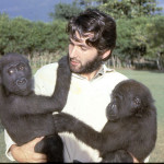 Here I am carrying the gorillas back to their quarters after some vigorous exercise on the nearby grassy field - 1965. While it was impossible to be sure of the exact origin of our two gorillas, we assumed them to be western lowland gorillas (Gorilla gorilla gorilla). We decided it was extremely unlikely that they were Cross River gorillas (Gorilla gorilla diehli), a distinct subspecies from the Nigeria Cameroon border area, formally described and named in 2000.