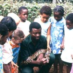 We encouraged school parties to the Zoo by giving talks and allowing the children to get close to the animals. Here keeper Nicholas Eze is showing the children a royal python.