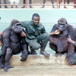 These three ape keepers built up very close relationships with the gorillas and also our group of chimpanzees. From the left is senior keeper Michael Iyoha, Nicholas Eze and Augustine Udoh. 1971.