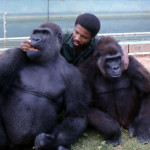 Michael Iyoha with the gorillas. 1973